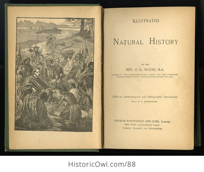 Antique Book Illustrated Natural History by Rev J G Wood C 1886 - #0v845OyfwtE-3