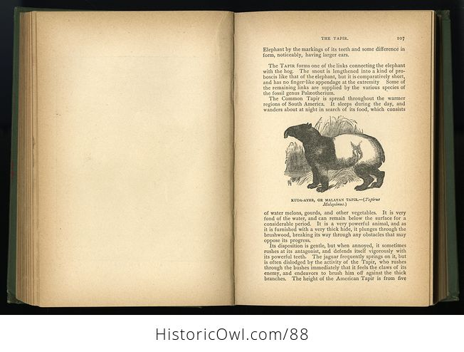 Antique Book Illustrated Natural History by Rev J G Wood C 1886 - #0v845OyfwtE-9
