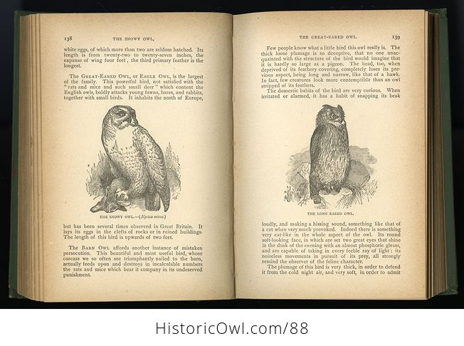Antique Book Illustrated Natural History by Rev J G Wood C 1886 - #0v845OyfwtE-11