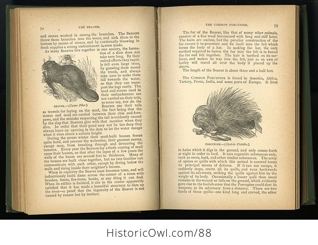 Antique Book Illustrated Natural History by Rev J G Wood C 1886 - #0v845OyfwtE-7