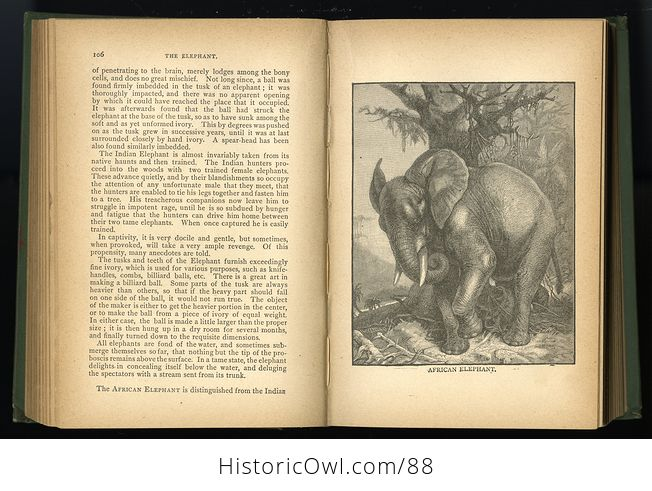 Antique Book Illustrated Natural History by Rev J G Wood C 1886 - #0v845OyfwtE-8