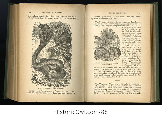 Antique Book Illustrated Natural History by Rev J G Wood C 1886 - #0v845OyfwtE-10
