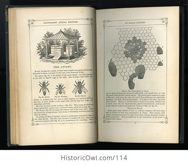 Antique Illustrated Book Annual Register of Rural Affairs for 1858 9 60 Vol Ii C1860 - #OjetYY0kTfQ-9