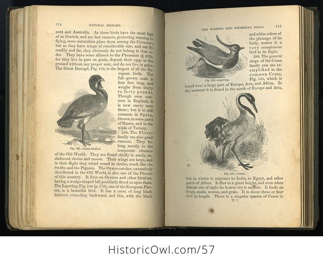 Antique Illustrated Book Natural History for the Use of Schools and Families by Worthington Hooker C1872 - #5KGAGUVt9Qk-7
