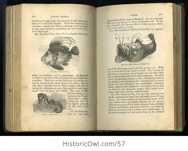 Antique Illustrated Book Natural History for the Use of Schools and Families by Worthington Hooker C1872 - #5KGAGUVt9Qk-9