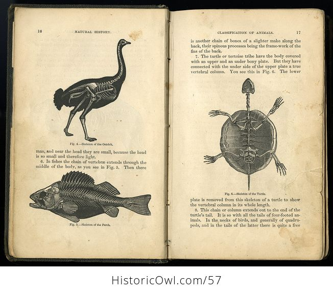 Antique Illustrated Book Natural History for the Use of Schools and Families by Worthington Hooker C1872 - #5KGAGUVt9Qk-3