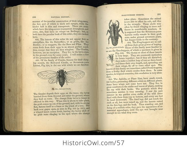 Antique Illustrated Book Natural History for the Use of Schools and Families by Worthington Hooker C1872 - #5KGAGUVt9Qk-8