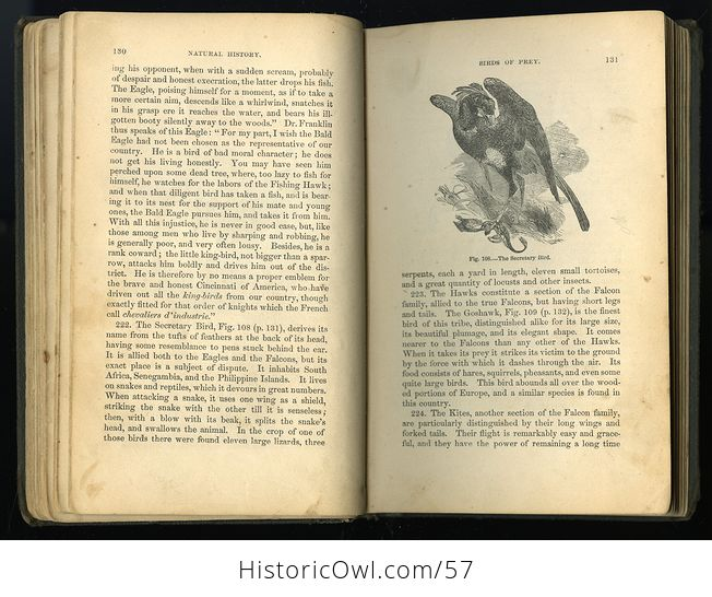 Antique Illustrated Book Natural History for the Use of Schools and Families by Worthington Hooker C1872 - #5KGAGUVt9Qk-6