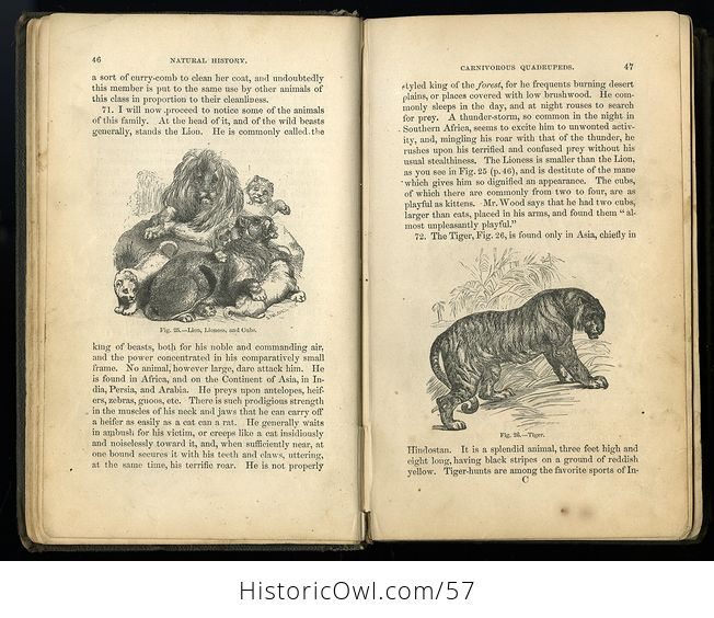Antique Illustrated Book Natural History for the Use of Schools and Families by Worthington Hooker C1872 - #5KGAGUVt9Qk-4