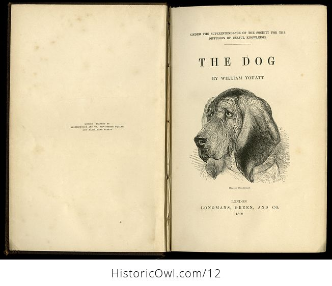 Antique Illustrated Book the Dog by William Youatt C1879 - #offK7OBGWBg-1