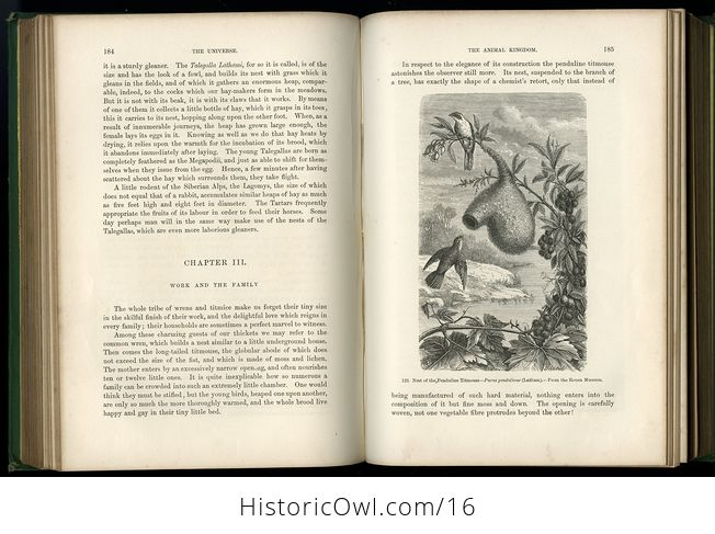 Antique Illustrated Book the Universe or the Infinitely Great and the Infinitely Little by F a Pouchet C 1877 - #lXXFChtPVxI-7