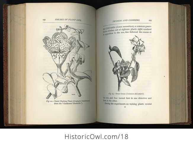 Freaks and Marvels of Plant Life by M C Cooke C 1880 - #IDX9BStlEig-4