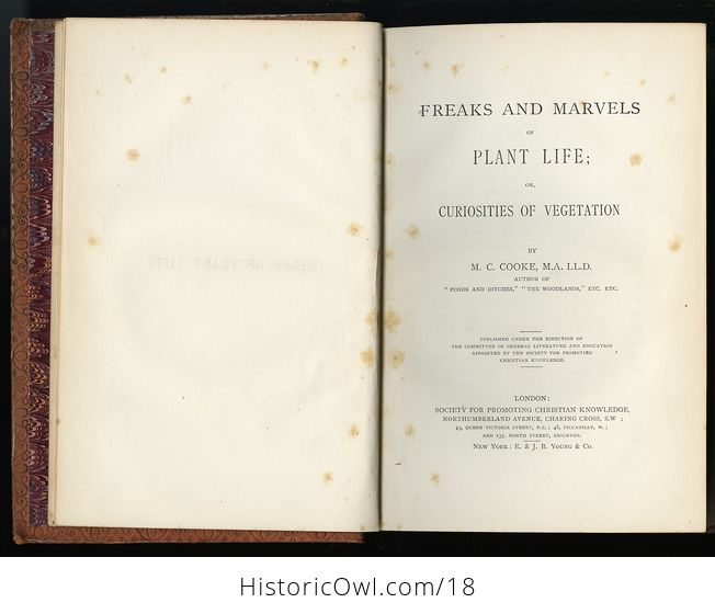Freaks and Marvels of Plant Life by M C Cooke C 1880 - #IDX9BStlEig-10