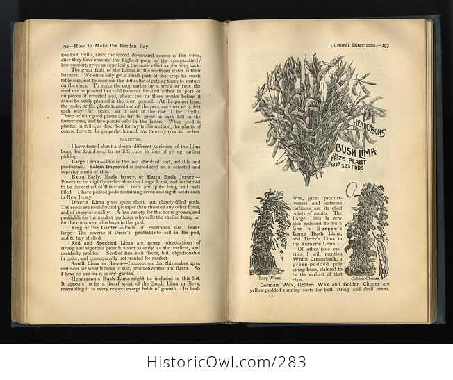How to Make the Garden Pay Antique Illustrated Book by T Greiner C1890 - #wUany4c9AoM-7