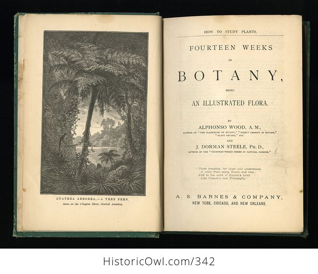 How to Study Plants Fourteen Weeks in Botany Being an Illustrated Flora Antique Illustrated Book by Alphonso Wood and J Dorman Steele C1879 - #rc4zlE1XwUU-3