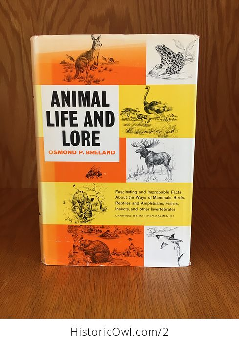 Illustrated Book Animal Life and Lore by Osmond P Breland 1963 - #u3KAMQRibqY-1
