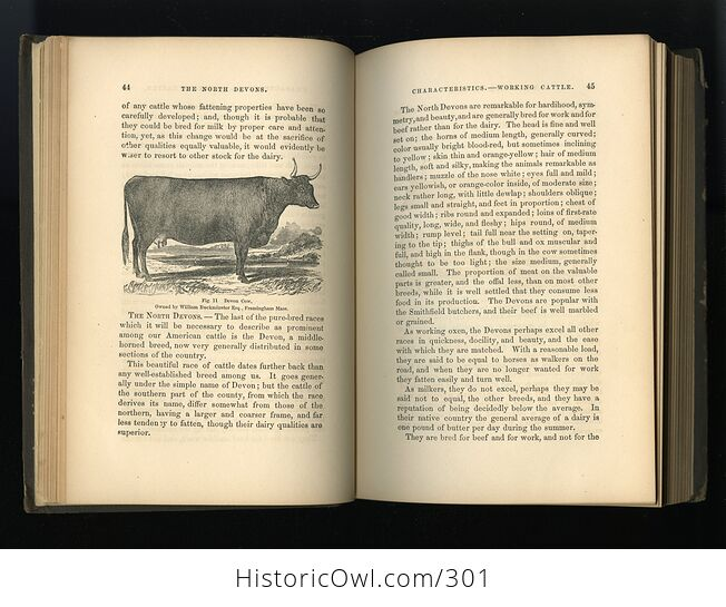 Milch Cows and Dairy Farming Antique Illustrated Book by Charles L Flint C1859 - #i29Hij4XmDQ-6