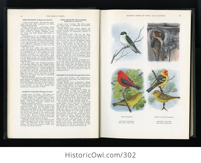 The Book of Birds Published by the National Geographic Society C1927 - #DHRFv11ay10-8