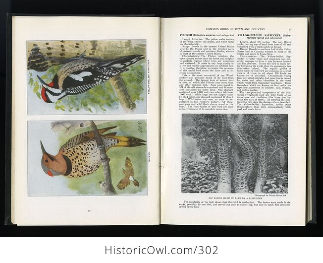 The Book of Birds Published by the National Geographic Society C1927 - #DHRFv11ay10-10