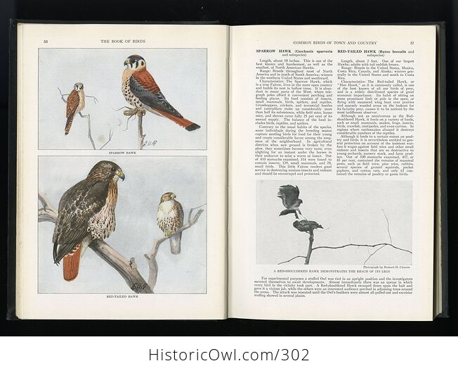The Book of Birds Published by the National Geographic Society C1927 - #DHRFv11ay10-9