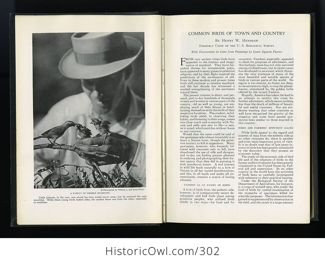 The Book of Birds Published by the National Geographic Society C1927 - #DHRFv11ay10-5