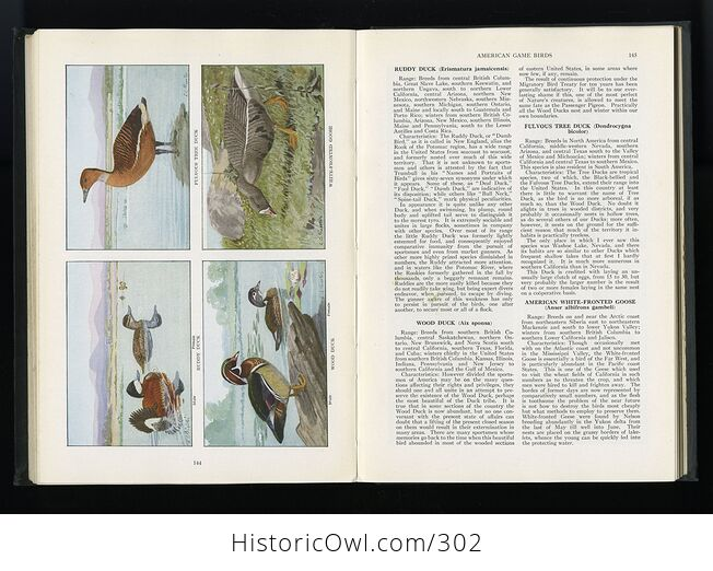 The Book of Birds Published by the National Geographic Society C1927 - #DHRFv11ay10-12