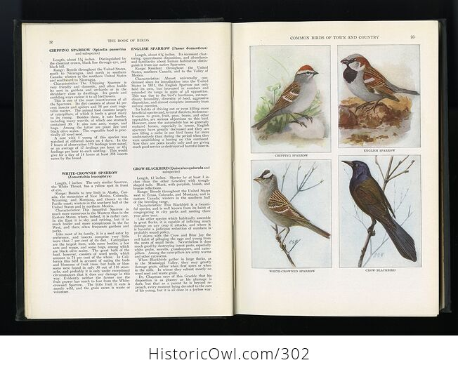The Book of Birds Published by the National Geographic Society C1927 - #DHRFv11ay10-6