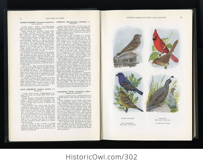 The Book of Birds Published by the National Geographic Society C1927 - #DHRFv11ay10-7