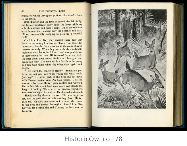 Vintage Book the Phantom Deer by Joseph Wharton Lippincott 1954 - #jOfUo1QJhAA-9